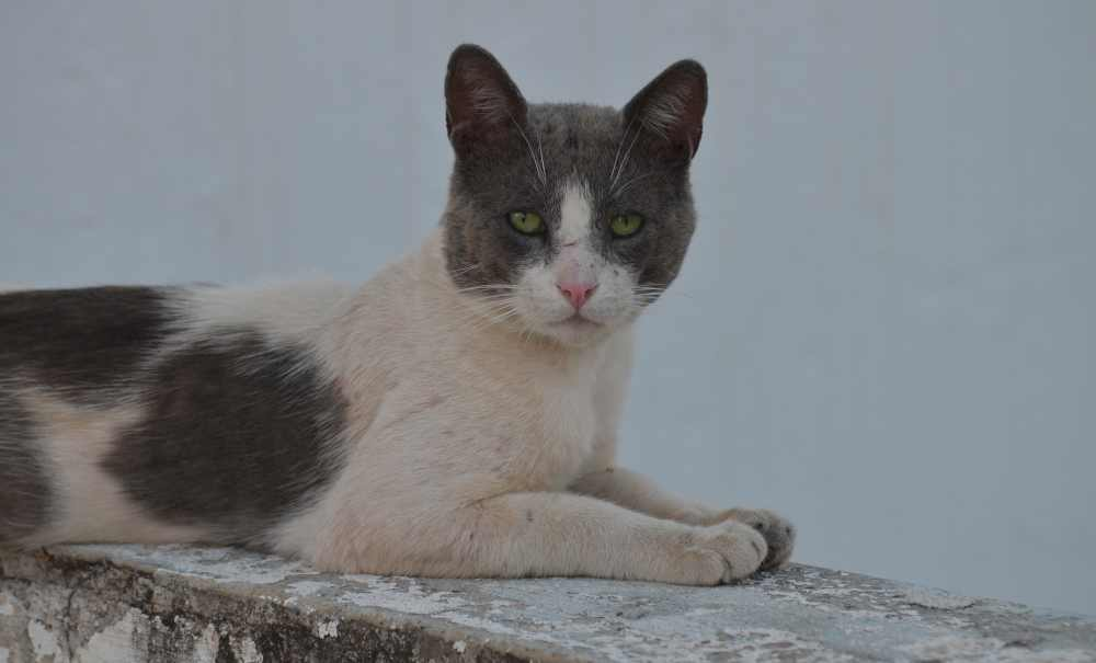 greek feral cat on our  roof
